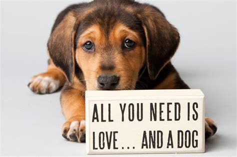 how to adopt a how to adopt a from a shelter hirerush