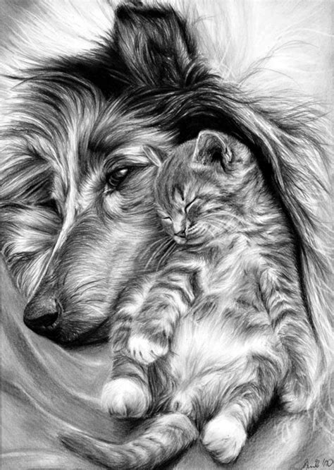 drawing and painting animals 40 realistic animal pencil drawings animal pencil drawings drawings and animal