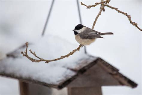 is winter bird feeding good for birds my wisconsin