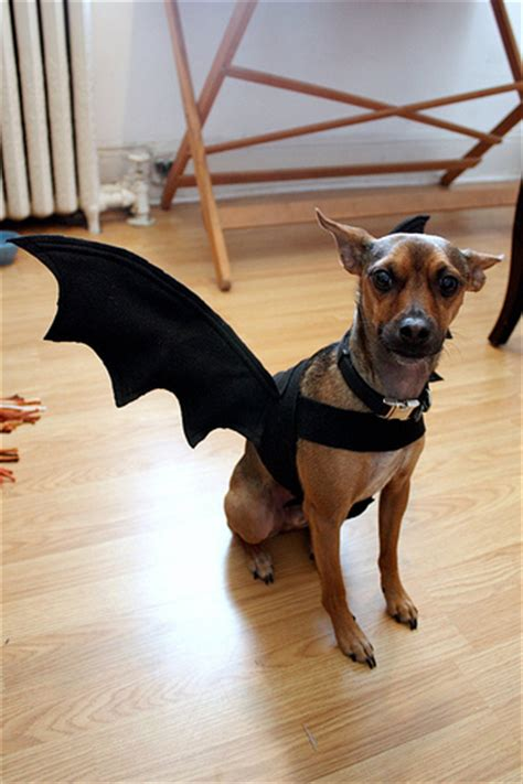 Homemade Halloween Costumes For Small Dogs