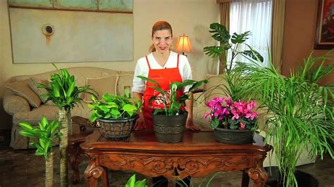 cuidado plantas interior c 243 mo cuidar plantas de interior