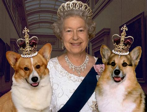 queen elizabeth dog a royal treatment for queen elizabeth s pet dogs
