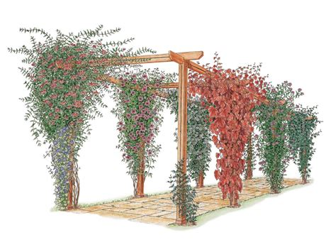 garden structures for climbing plants how to choose and maintain climbing plants diy