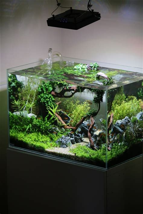 aquascaping planted tank planted tank coisia vallem by lauris karpovs aquascape