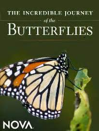 the white butterfly s journey books the journey of the butterflies top