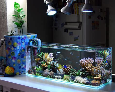 coolest nano reef saltwater aquarium