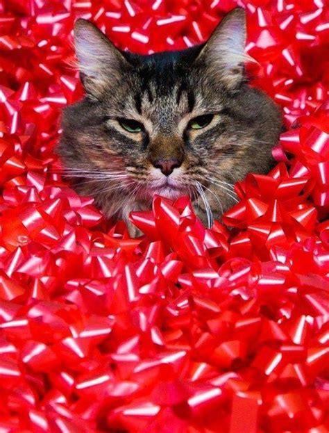 shades  grey  december   love cats  kittens