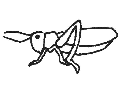 preschool grasshopper coloring pages stunning grasshopper coloring page ideas gekimoe 40995