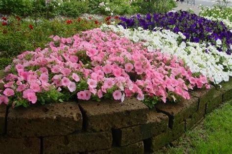 realizzazione giardini fai da te presenza aiuole vialetto realizzazione bordure fai da