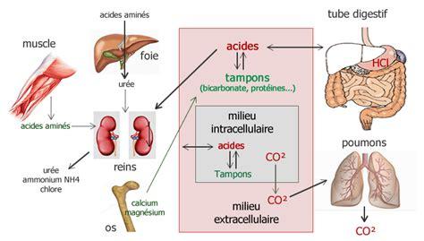 alimentazione acido basica alimentation acido basique une pol 233 mique utile anti