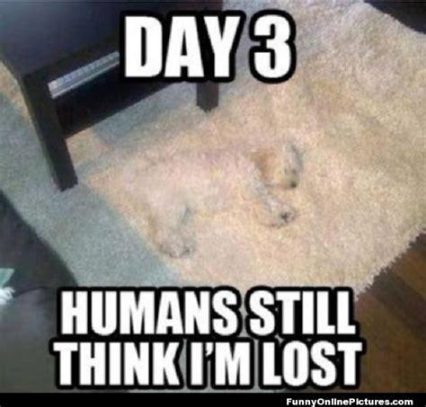 Lost Dog Meme - funny dog meme