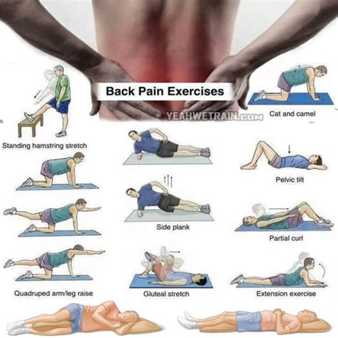 Safe Exercises For Lower Back Back Exercises Healthy Back Workout Lower
