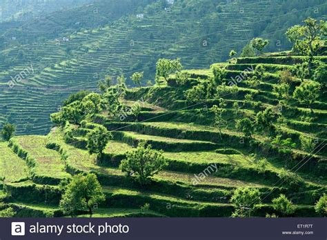 terrace farming in hindi terrace farming in uttarakhand india asia stock photo