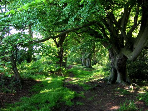 woodland tree basic woodland survival survive today prepare for tomorrow