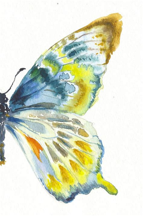 blue gold butterfly wing butterfly drawing image 699201 on favim