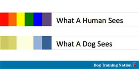 dogs color vision if dogs aren t colorblind what colors can dogs see