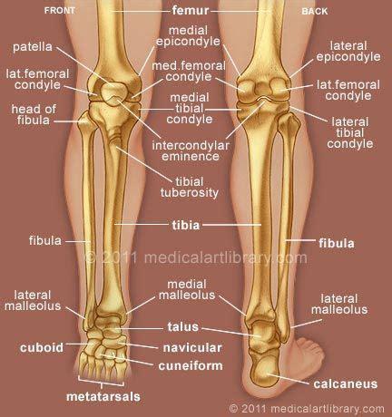 left knee ligaments diagram 25 best anatomy of the knee ideas on knee