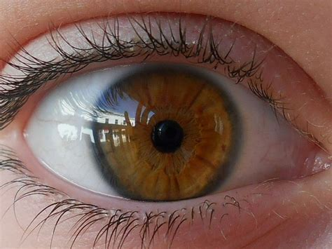 what is the rarest eye color best 25 rarest eye color ideas on