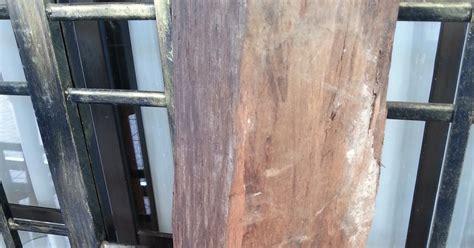 Galeh Kelor kayu warisan malaysia tongkat kayu gamunggal teras