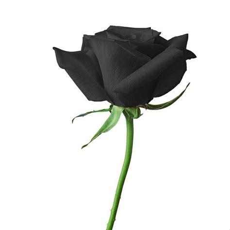 jual biji bunga mawar hitam  lapak  special store