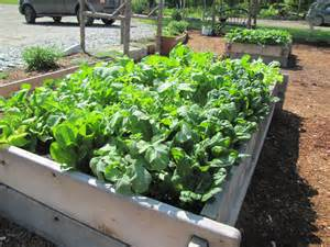 our kitchen gardens flourish grow compost of vermont