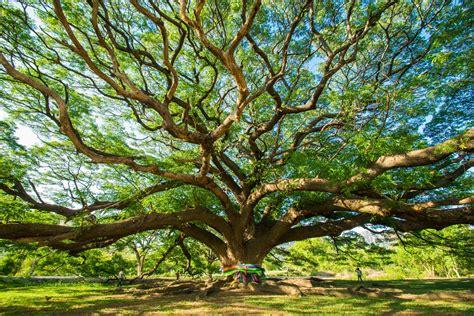 bigw trees la naturopathie osez la naturo attitudeosez la naturo