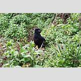 Mountain Gorilla Habitat   1024 x 683 jpeg 420kB