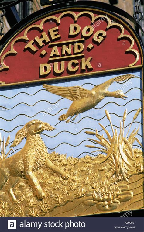 and duck pub the and duck pub sign stock photo royalty free image 11237066