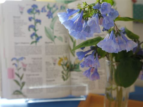 wildflowers and marbles notebooks acquiring habits with intellectual effort