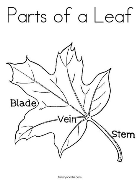 leaf identification coloring pages parts of a leaf coloring page twisty noodle