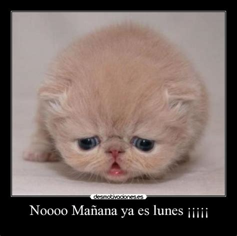 imagenes mañana lunes nooo pics for gt hoy es lunes noooo