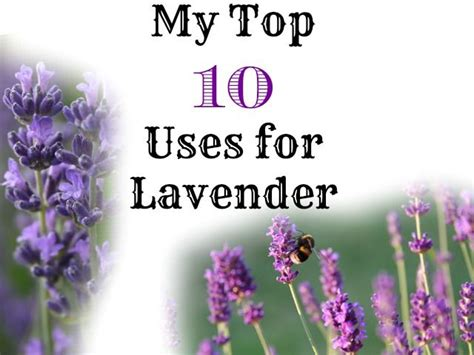 top 10 uses for lavender gardens birds and look at