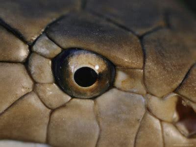 Kaos 3d Snake Eye cobra eye ojo de cobra ojos eye