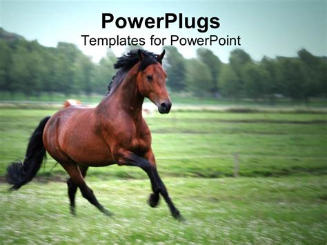 powerpoint themes horse powerpoint template brown and black horse running on a