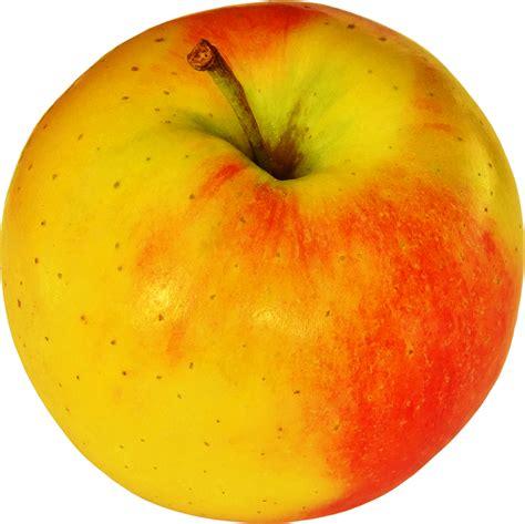 fruit apple free stock photo of apple apples fruit