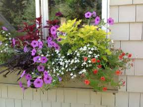 colorful annuals for shade part two carolyn s shade gardens