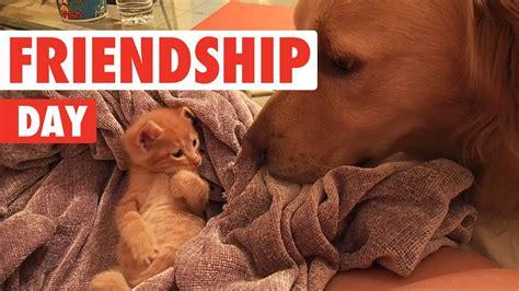 international day  friendship funny  pet