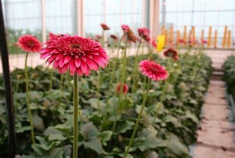 serre fiori scegliere le serre per piante serre da giardino serre