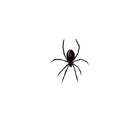 spider tattoo png black widow spider free vector 4vector
