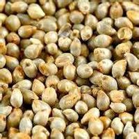 millet a carbohydrates millet manufacturers suppliers exporters in india
