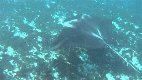 manta ray boat giant manta ray jumps into boat and attacks youtube