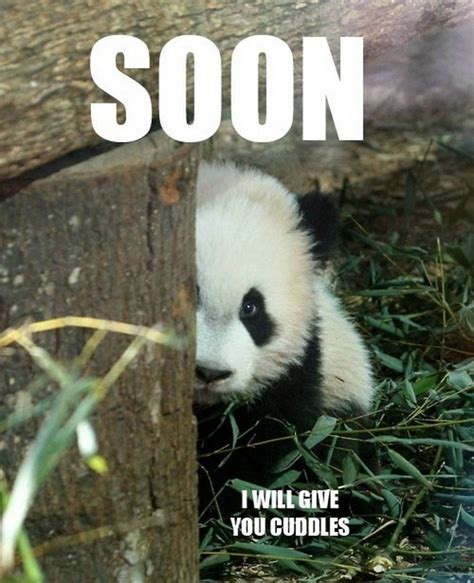 Cutest Animal Memes - funny animals pandas 11