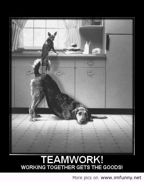 Team Work Meme - funny pics and quotes dogs teamwork funny picture