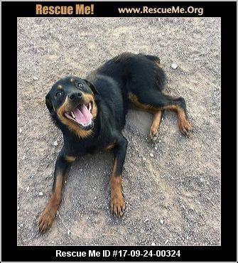 rottweiler rescue colorado springs colorado rottweiler rescue adoptions rescueme org