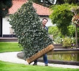 sichtschutzelemente garten sichtschutz garten pflanzen gartens max