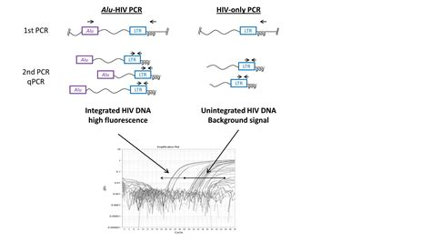 hiv 2 pcr test digital based alu hiv pcr for quantification of integrated