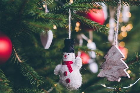 5 ways to recycle your christmas tree ourauckland