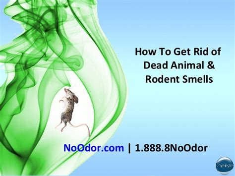 how to get rid of bad odor in house top 28 how to get rid of smells how to get rid of