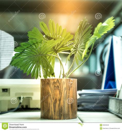 plant on desk plant on the desk stock photo image 59559349