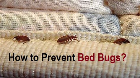 how to stop bed bugs how to prevent bed bugs
